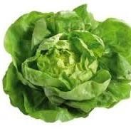 Groene kropsla