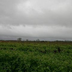 Wriemeling - Herent - Herfst 2013