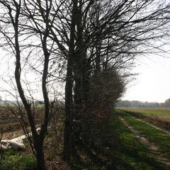 Wriemeling - Herent Voorjaar 2012