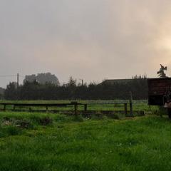Wriemeling - Herent - Zomer 2011